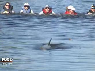 Élőláncban pacsáltak, hogy megmentsék a delfineket