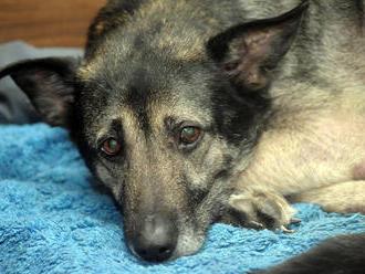 Záhadná choroba psov v Nórsku: Hlásia už 26 smrteľných prípadov