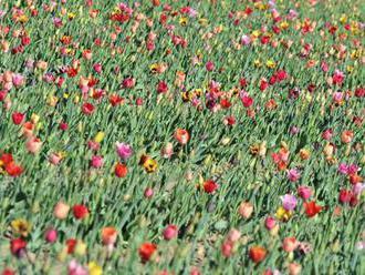 Letošek je rokem zdraví rostlin, stát chce osvětu veřejnosti