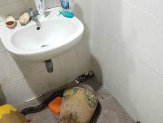 Ženu prekvapil na toalete had. S tvorom musela zviezť krvavý súboj