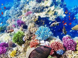 Veľký bariérový útes prišiel za 30 rokov o polovicu koralov