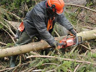 V NP Šumava vytěžili méně kůrovcového dřeva, než čekali