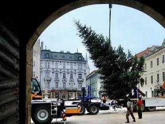 V centre Bratislavy už stoja vianočné stromy
