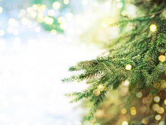V Piešťanoch ukradli vianočný stromček z čarovného lesa