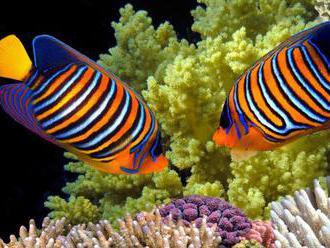 Klimatické zmeny by mohli do roku 2100 zabiť takmer všetky koralové útesy