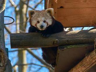 FOTO: Zoo Liberec uzavřela turnikety. Život se tu ale nezastavil
