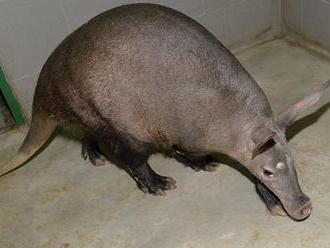 Svatokopecké zoo po uzavření klesly příjmy o více než dva miliony Kč