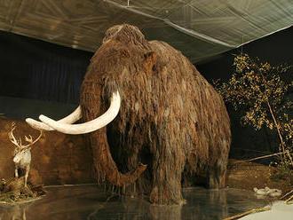 V Mexiku objavili kosti desiatok mamutov