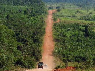 Lidé loni podle studie zničili 11,9 milionu hektarů tropického lesa