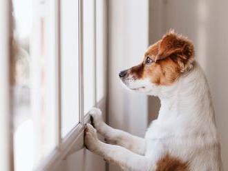 Psi po karanténě se sami doma mohou trápit. Pomohou tyto cviky i léky proti úzkosti