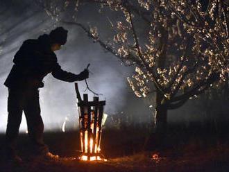 Vyšší kompenzace za loňské mrazy pro ovocnáře schválila vláda