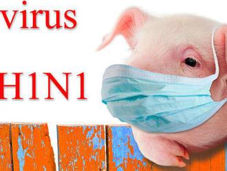 Čínske vedenie bagatelizuje štúdiu o potenciáli nového typu prasacej chrípky