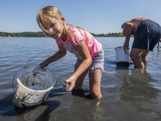 Dobrovolníci v Plzni zachraňovali mlže z mělčiny rybníka