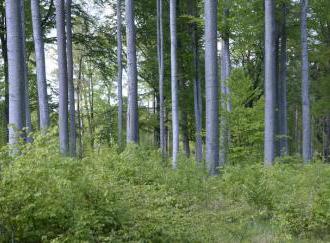 Státním vojenským lesům loni klesl zisk o 88 pct na 9,1 mil.Kč