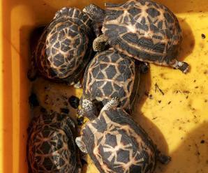 Salmonelózou sa možno nakaziť aj od zvierat ako korytnačky či hady