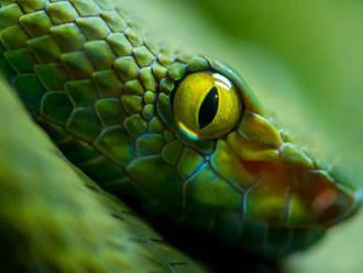 Muž měl v MHD místo roušky kolem obličeje hada. To nestačí, tvrdí dopravní podnik