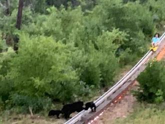 VIDEO: Nečakaná návšteva na bobovej dráhe. Do cesty sa postavila medvedia rodinka