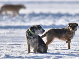 Soukromí veterináři budou vést registr psů, rozhodne o tom vláda