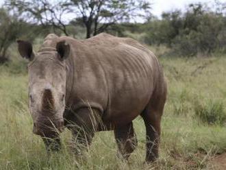 Nosorožčí sirotci jsou křehcí, v noci pláčou, píše AFP