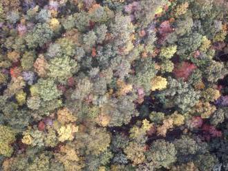 D. Hrežík : Výmera lesov na Slovensku z roka na rok rastie