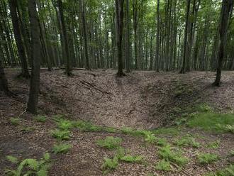 Výmera lesov na Slovensku predstavuje 41 percent územia a z roka na rok rastie