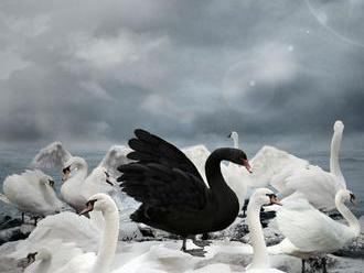 V Česku začíná sčítání vodních ptáků, zapojí se stovky dobrovolníků