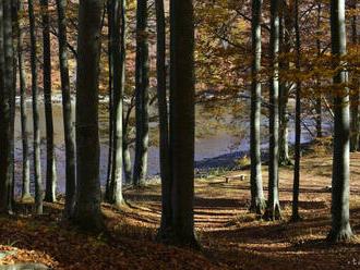 V bratislavských lesoch vybudujú nový rekreačný areál na Peknej ceste