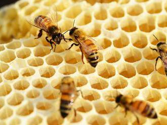 Prešovská univerzita spúšťa výučbu včelárstva, zriadi aj včelnice