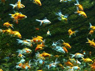 Tretine sladkovodných rýb na Zemi hrozí vyhynutie, varuje správa o stave rýb