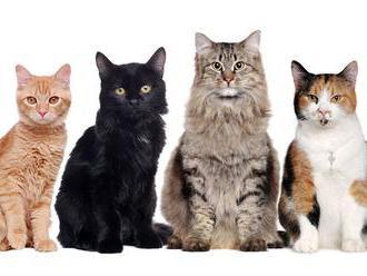 Výskum: Mačky vám môžu zničiť ľúbostný život
