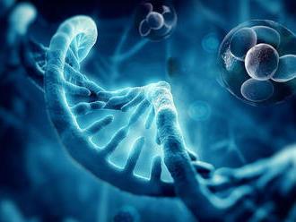 Slovenskí vedci: Proteíny regulujú zapínanie a vypínanie viac ako 500 génov