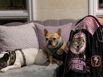 Lady Gaga má všechny své mazlíčky zase doma. Unesené psy našla neznámá žena