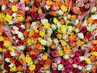 Zájem o rozvoz květin je na MDŽ větší než na Valentýna