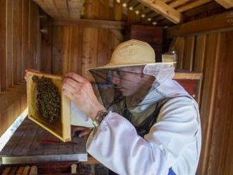 Cisterciáci z Vyššího Brodu obnovili chov včel