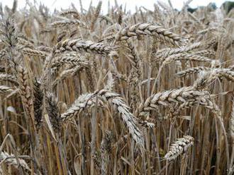 Globálny rast cien potravín sa v marci nespomalil
