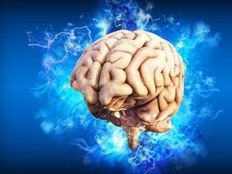 Vedci vypestovali fragment samoorganizujúceho sa mozgového tkaniva