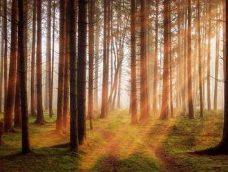 V kampaních zpochybňujících energetické využívání dřevní biomasy nedostávají prostor klíčová fakta