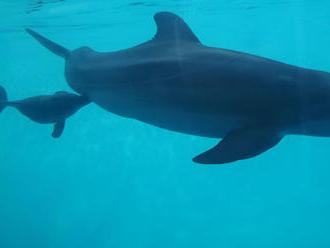 Na pobreží Ghany more vyplavilo desiatky mŕtvych delfínov