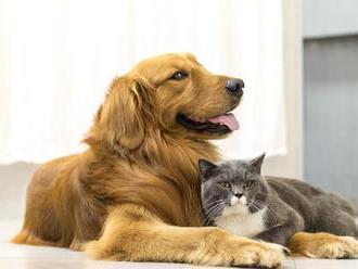 Prečo majú mačky a psy náhle výbuchy bláznivého behu