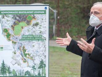 V lesoch sa bude ťažiť menej, Bratislava a štát našli kompromis