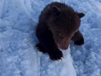 Medvedík uzavrel v Tatrách celú dolinu. Skotúľal sa až k turistom a zúfalo hľadal mamu