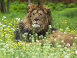 Zoo D. Králové otevřením areálů safari zahájila hlavní sezonu