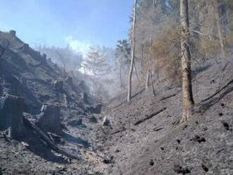 Hasiči dnes likvidovali požáry lesa, komplikoval je vítr