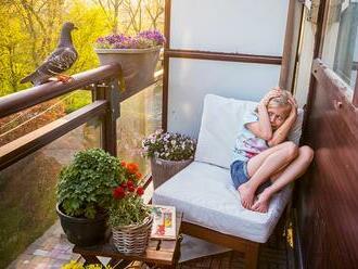 Nejlepší snímky přírody: World Press Photo se dá vyhrát i s fotkami z balkonu