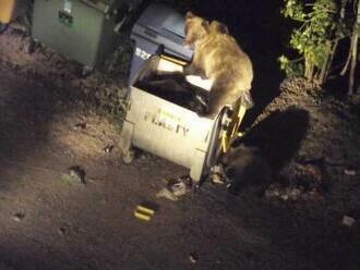Po zásahu proti medveďom panuje napätie, prípadom sa zaoberá aj polícia