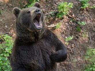 Koľko nás stojí medveď hnedý