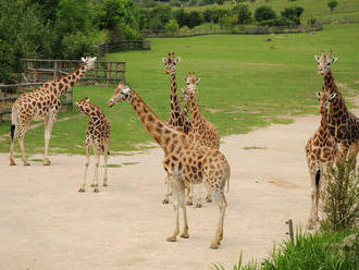Veřejnost hodnotí vize dvou uchazečů o post šéfa ústecké zoo. Většina je pro Fejka