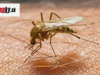 Nová hrozba na Slovensku! Rok 2020 priniesol šokujúci záver monitorov, druh ázijského komára je už u nás!