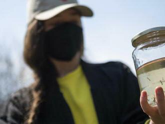Na juhu Slovenska sa objavil nový nebezpečný druh komára