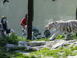 V bratislavskej zoo uhynul 17-ročný leopard cejlónsky
